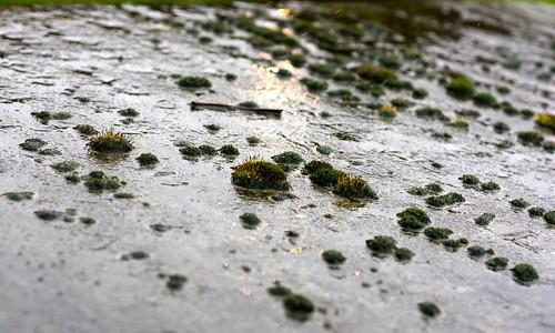 Cemetery Rain