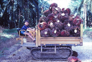 1982 - Shan on oil palm tractor