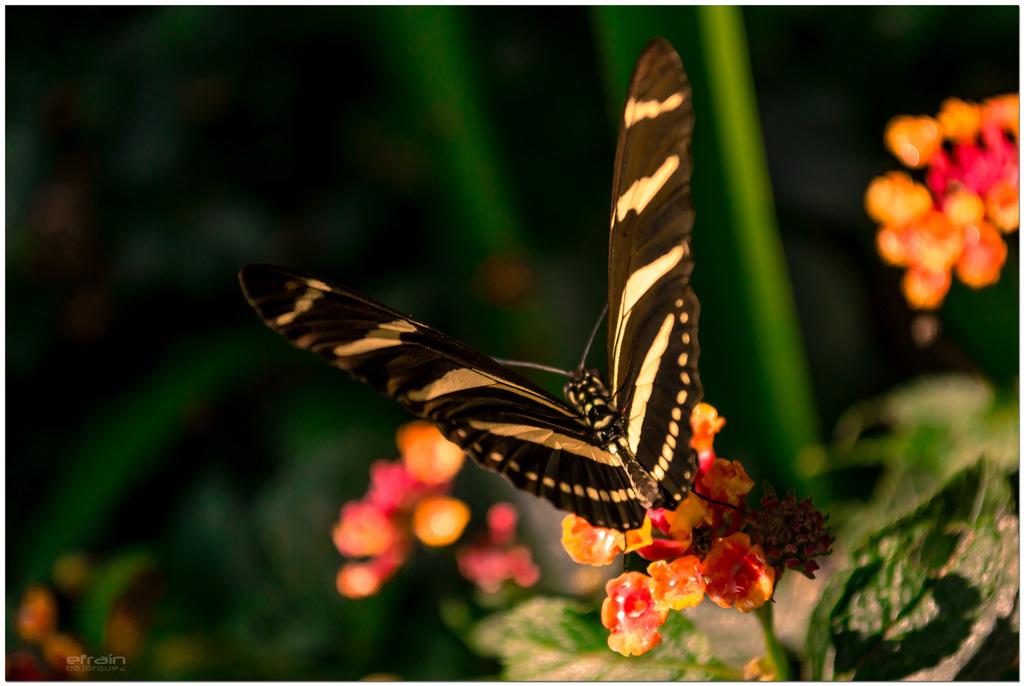 2012-10-20: Belleza natural