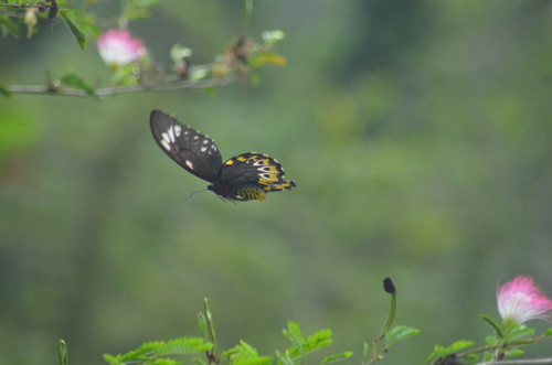 Looking up to the Butterfly flight