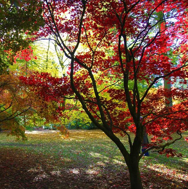 Westonbirt - Acer Glade por John Dalkin
