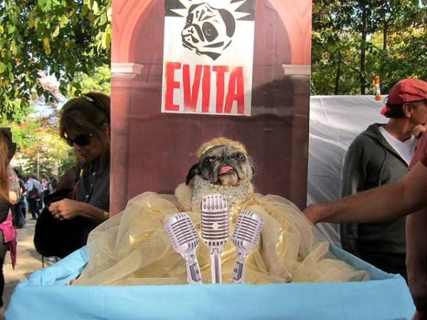 Halloween Dog Parade 2012, Tompkins Square Park: Evita Pugron