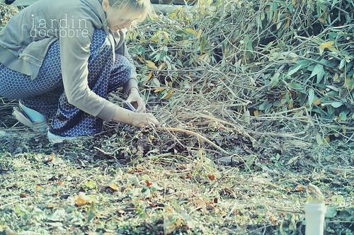 jardin d'octobre