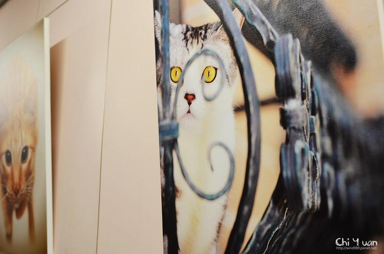 Always Cat05.jpg
