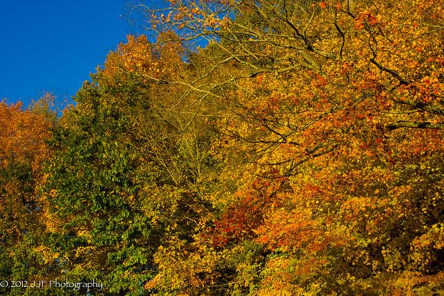 2012_Oct_16_Fall Foliage_006