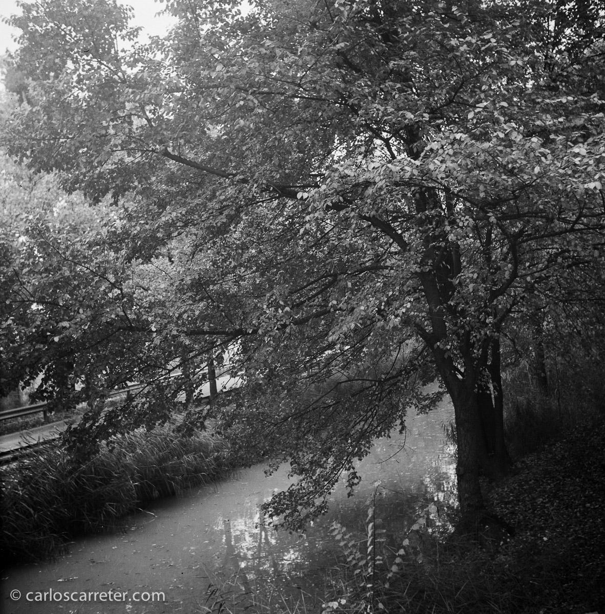 Paseo por el Canal Imperial para homenajear a un roble