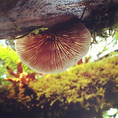 Mushroom from below