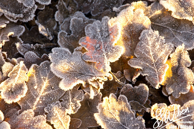 Frost Bitten – Daily Photo (3rd December 2012)