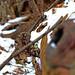bark peeling from the fallen tree