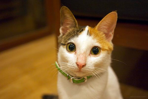 My cat, Sushi