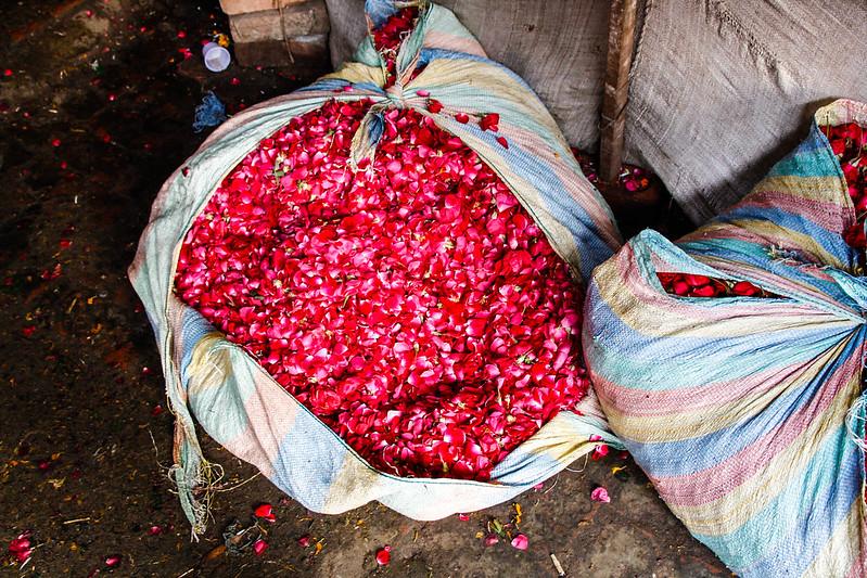 Mehrauli Flower Market_MG_2588November 19, 2012