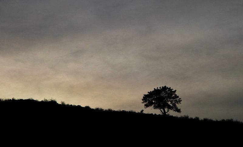 Lone Tree at Daybreak