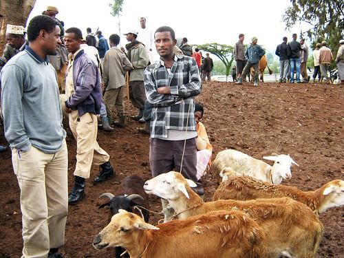 Sheep market, Ējērē (Ejere), East Shewa, Oromiya, Ethiopia