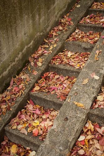 Leaf Leaves Leaving