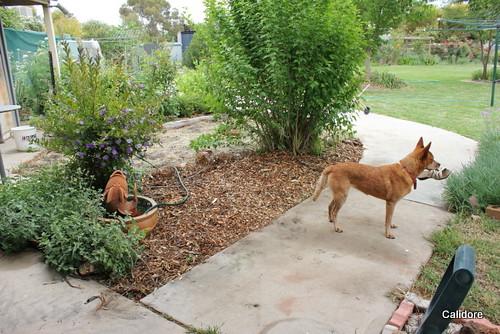 Mulch disguises many gardening sins