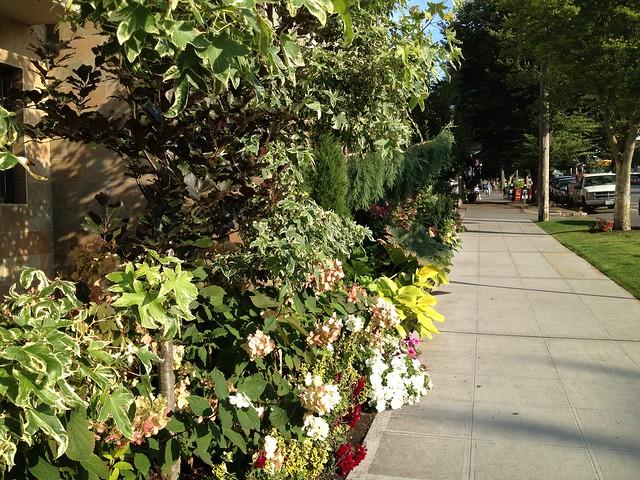 Lush sidewalk plantings