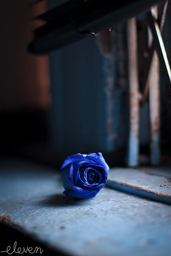 Blue Rose Against Blue Wall by Eleven says Hi ~ NYC~