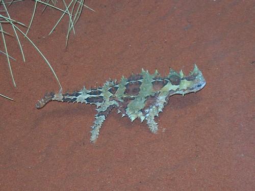 VIAGGI: AUSTRALIA 2012 - 359