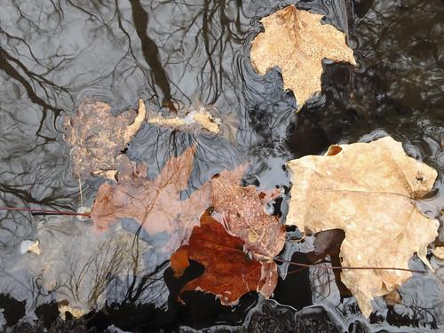 Macricostas Grotto Reflections