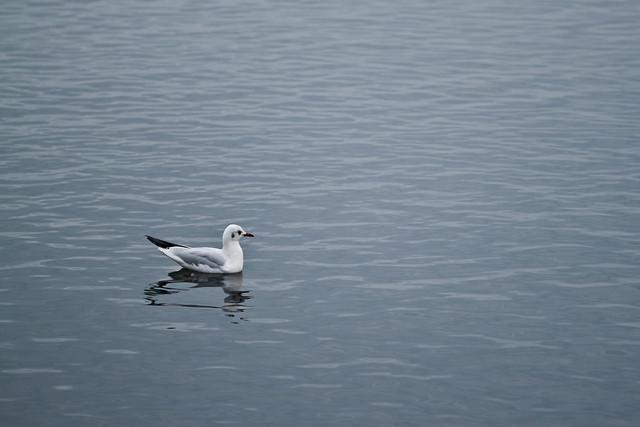 Alone On The Huge Sea