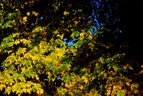 20121111-30_Autumn Colours near Broadway by gary.hadden