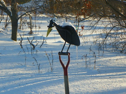 joe crow