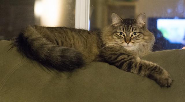 Momo the cat taken at f3.5