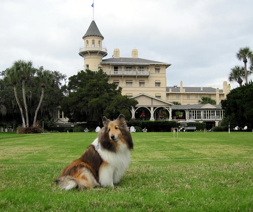 Handsome dog at Jekyll Island club