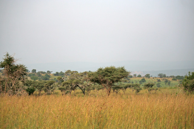 grasslands landscape at Akagera National Park