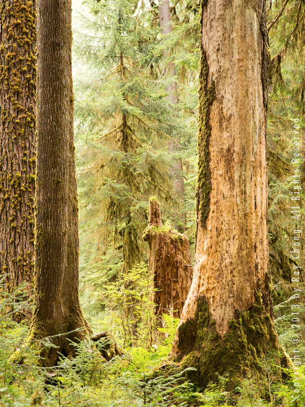 Hoh Rainforest, 2012