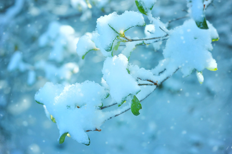 Winter's bough