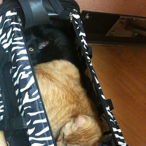 Beso & Luna in the Carrier