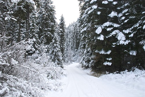 Spring Creek road
