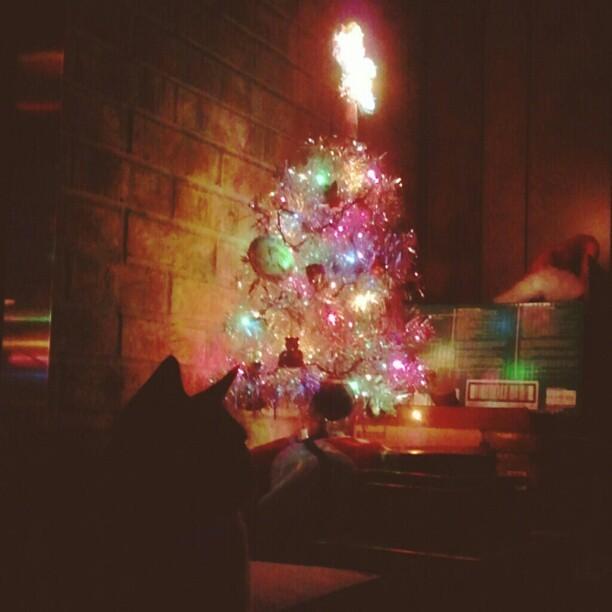 Rufus' first Christmas