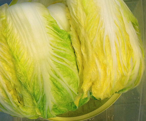Stacked wilted cabbage