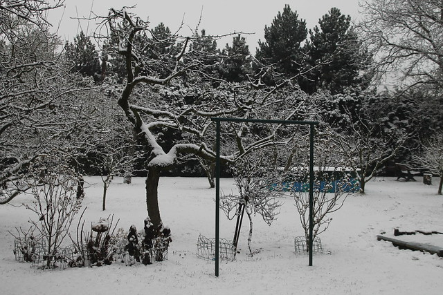 Project 52 #51: I'm dreaming of a white Christmas...