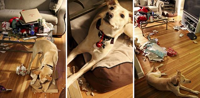 shiso making a mess