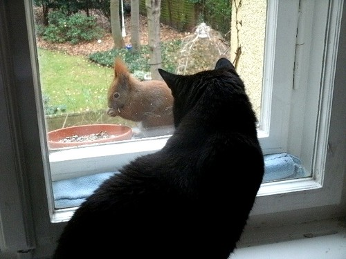 Katze und Eichhörnchen 2
