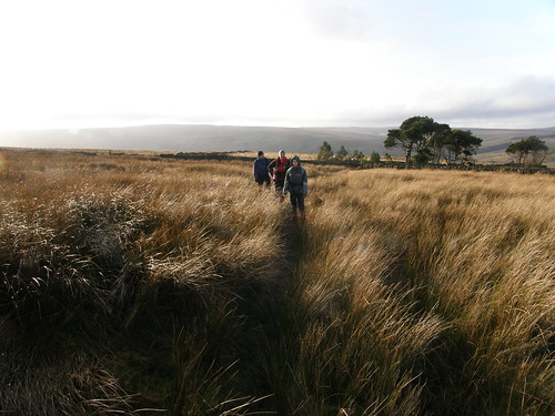 On the moorland