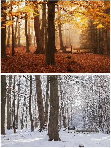 Seasons (2/4) by Ben Locke (Ben909)