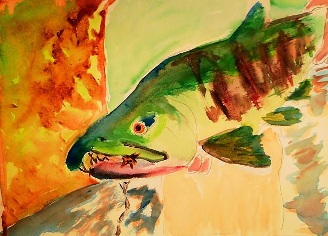 Chum Salmon Kilchis