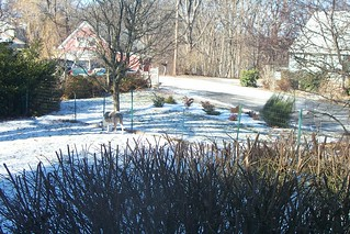 Front garden after a dusting of snow