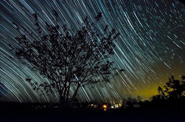 Tree of Life. por Ibrahim Cetindemir