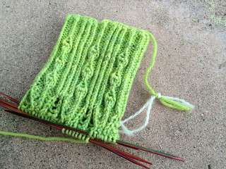 Echevaria sock