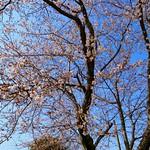 早咲き02