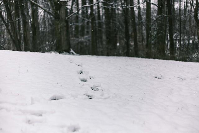 snow in springtime