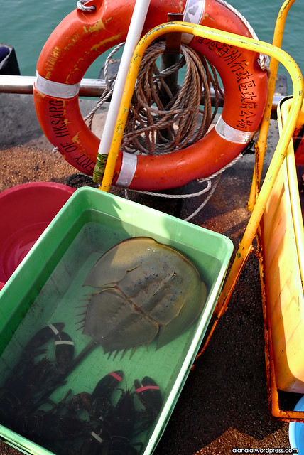 Sea animals to release