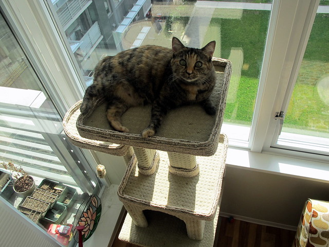 Lofty Perch