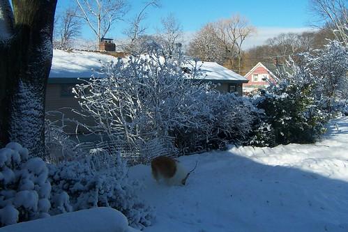 Snowmore0006