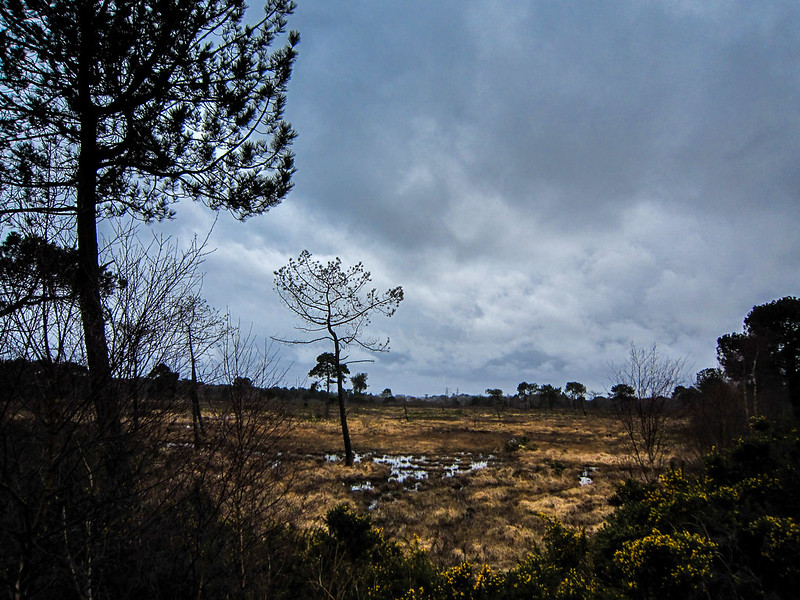 Rain clouds over the Heath